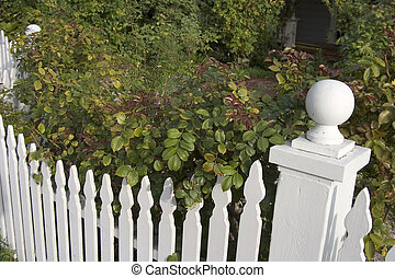 A picket fence with dense bushes behind it.