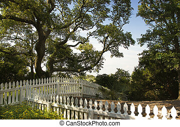 Picket fence. - White picket fence with live oak tree on ...