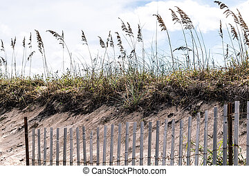 Pickett Fence Dunes Beach Grass - Pickett Fence with Beach...