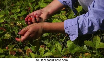 picking berries in the woods in hand