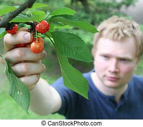 Picking cherries 2