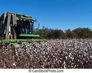 Farmer picking cotton with a cotton picker.