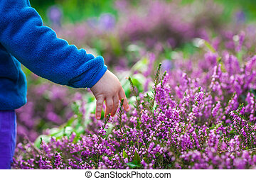 Picking up purple Loosestrife Flowers - Little boy picking...