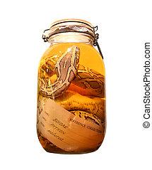 pickled snake in a bottle