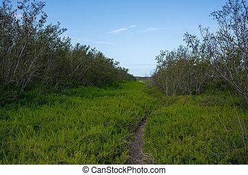 Pickleweed Hangs Over Narrow Trail