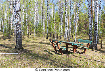 Picnic area in the forest glade