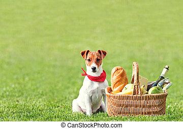 picnic basket on green lawn