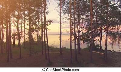 Aerial Drone Flight Footage: Rise up above picnic area surrounded by pine trees. In the Background Beautiful Sky and Water in sunset soft light. Magestic landscape. Kiev Sea, Ukraine, Europe.