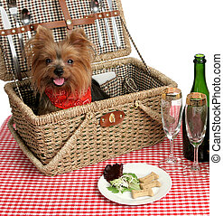 Picnic Puppy - Two adorable yorkies on a picnic with wine...