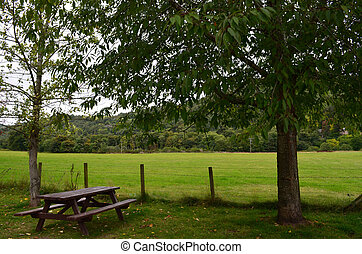 Picnic Table Under a Tree in Inverness Scotland
