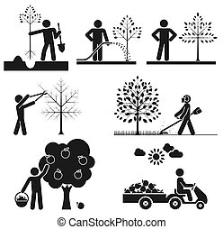 Pictograms representing people taking care of fruit tree