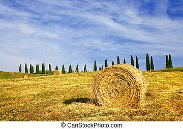 rural landscapes of Tuscany