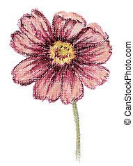 Picture, flower of a cosmos