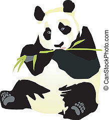 giant panda - picture giant panda on a white background. ...