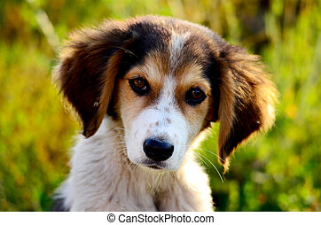 Cute stray dog - picture of a Cute stray dog. Sad puppy.