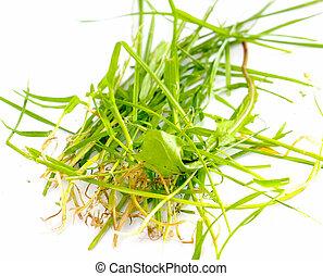freshh grass in a studio