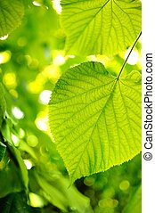 Picture of a green leaves over abstract blurred background