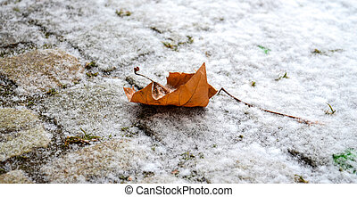 Maple Leaf on snow