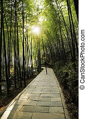 pathway - Picture of a pathway at forest.
