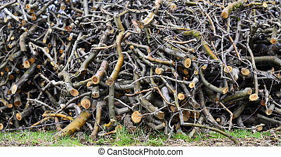 Pruned apple twigs - Picture of a Pruned apple twigs