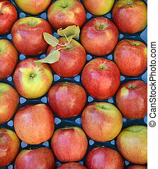 ripe apples for sale in a display crate