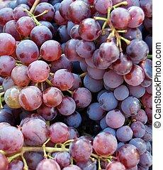 Ripe red grape