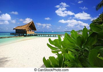 Picture of beach scene at Maldives.