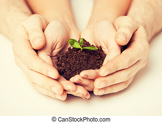 hands with green sprout and ground