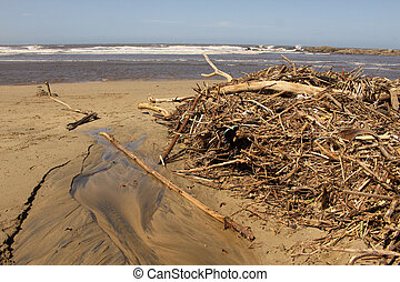 Picture of Driftwood after High Tide Storm