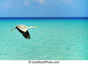 Picture of flying seabird at beach of maldives.