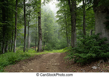 Picture of foggy forest on summer