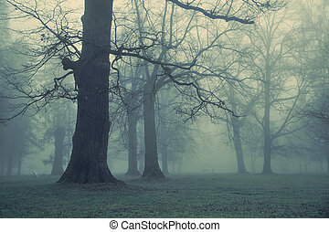 Picture of giant tree in the forest