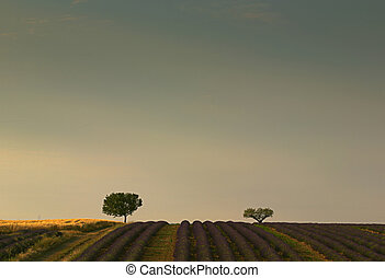 Picture of lavender fields with a lot of empty space on top