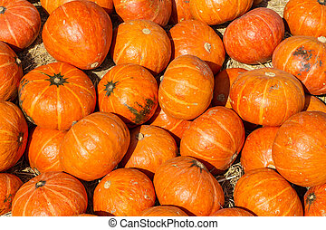 picture of pumkins