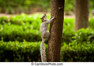 Picture of Squirrel hanging on a tree