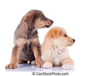 two stray puppies looking to a side