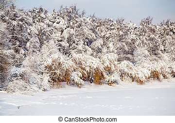 Picture of winter trees with snow and blue sky