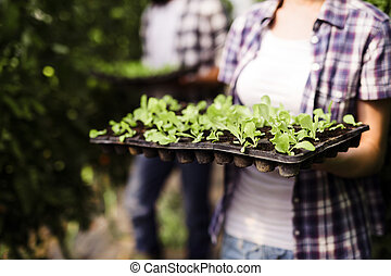 Picture of woman holding young plants in hands