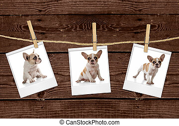 Pictures Hanging on a Rope of an Adorable Puppy