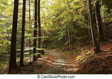 Picturesque autumn forest - Trail through the picturesque ...