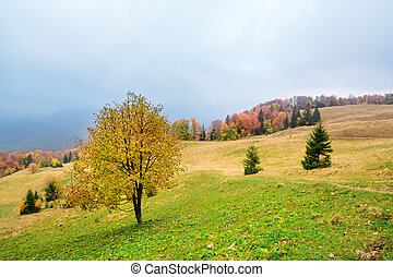 Picturesque autumn scenery in the mountains with meadow and colorful trees on foreground and fog above valley. II