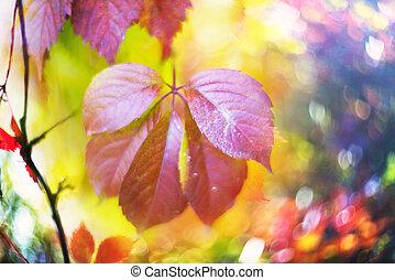 picturesque bokeh of autumn
