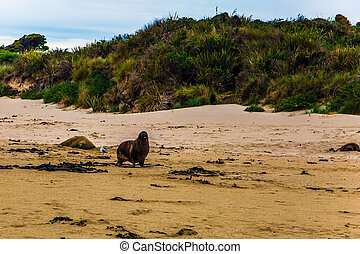 Huge sea lions resting on the sand