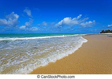 Picturesque coast Diani