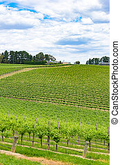 Picturesque countryside landscape of green vineyard hills. Nature background