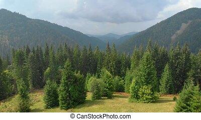Picturesque Hillside Meadow in Carpathian Mountains of Ukraine