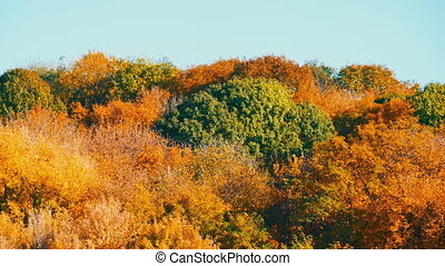Picturesque landscape colorful autumn foliage on trees in...
