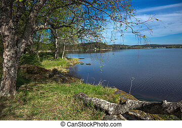 landscape on the shore of a lake in Karelia