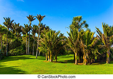 Picturesque meadow in a palm grove
