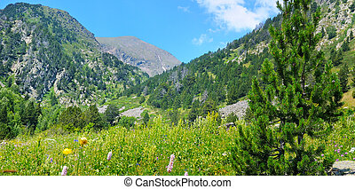mountain landscape,meadow, hiking trail and beautiful sky. Wide photo.